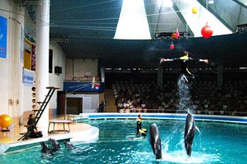 Dolphinarium in Klaipeda