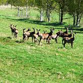 Ventspils Deer Garden, Ventspils