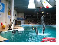 Морской музей Литвы, дельфинарий