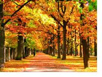 Золотая осень в Пярну
